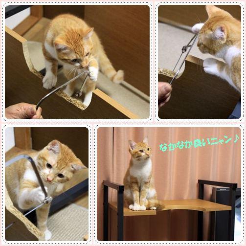100118cats